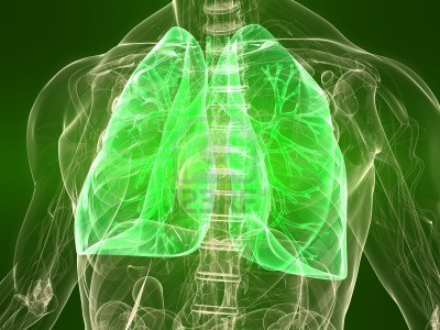 https://goodliving.vn/wp-content/uploads/2013/09/6443688-transparent-body-with-healthy-lungs.jpg